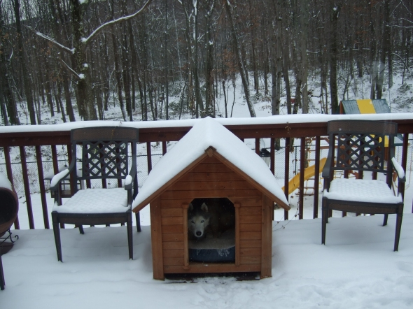 Sierra enjoying the winter