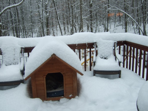Sierra's roof was clean before it started snowing.