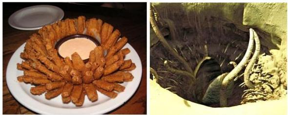 Blooming Onion and Sarlacc pitt